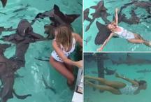 शार्क को टक्कर देती है ये लकड़ी, करती है ऐसे खतरनाक स्टंट