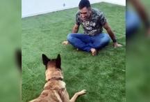 VIDEO: धोनी घर में डॉग के साथ कुछ इस तरह मस्ती करते नजर आए, पत्नी साक्षी ने पोस्ट की वीडियो