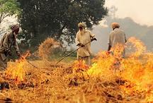 पंजाब, हरियाणा में किसानों ने पराली जलाई तो जिम्मेदार अधिकारियों की कटेगी सैलरी : एनजीटी
