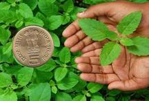 तुलसी का पत्ता और 5 रुपए का सिक्का, बदल देगा आपका सोया भाग्य, बस करना है ये