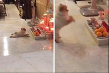 मंदिर में बैठ कुत्ता करने लगा पूजा-पाठ, वीडियो ने इंटरनेट पर मचाई धूम