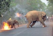 Shocking: हाथी और उसके बच्चे को आग लगाकर भगाया, फोटो देखकर लोग हुए दंग