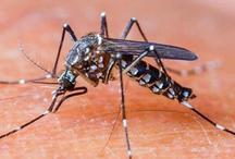 दिल्ली एनसीआर में डेंगू ने फिर दी दस्तक, एक हफ्ते में सामने आए इतने मामले