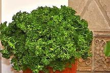 घर के इस कोने में न रखें कोई भी पौधा, हो सकता है बड़ा नुकसान