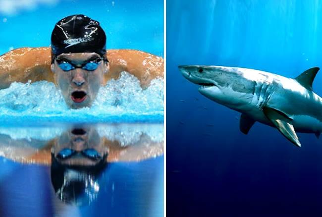 नकली शार्क से हारे दुनिया के सबसे तेज तैराक माइकल, लोगों ने सुनाई खरी-खोटी