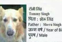 एजेंसी ने बनाया कुत्ते आधार कार्ड, पुलिस ने किया गिरफ्तार