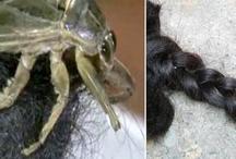 खुलासा: ये छोटा कीड़ा काट रहा है महिलाओं की चोटी!