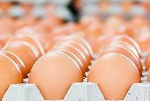 जहरीले अंडे खाने पर मजबूर हुआ यूरोप, अब लोग रहे हैं 'उबल'