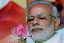 मध्य प्रदेश निकाय चुनाव में खिला 'कमल', कांग्रेस का 'पंजा' हुआ पस्त