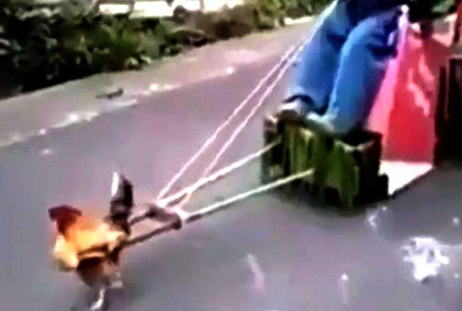 वीडियो: मुर्गा फर्राटा भगा रहा है गाड़ी, इतरा रहा है ऊपर बैठी शख्स