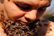 मधुमक्खी का छत्ता पहनकर बनाया विश्व रिकॉर्ड
