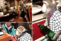 गजब: इस रेस्टोरेंट में बंदर हैं वेटर, खूब चाव से लोगों को परोसते हैं खाना