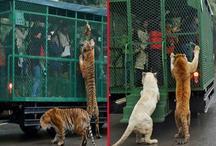 इंसानों को कैद कर के खूंखार जानवरों के बीच छोड़ देते हैं इस चिड़ियाघर में