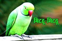 खुला पिंजरा: मिटठू-मिटठू की रट लगाए रहती मादा तोता