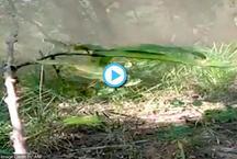 सुकमा में फटते हुए बम का CRPF ने बनाया वीडियो, हुआ वायरल
