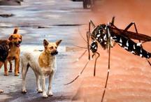 गजब! डॉक्टर से पहले कुत्ते लगाएंगे मलेरिया का पता
