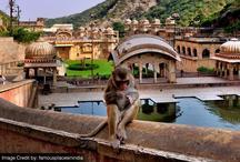 धर्म अध्यात्म: गलताजी के बंदर वाला मंदिर और इसकी मान्यता