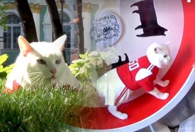हैरतअंगेज! ज्योतिष बनी बिल्ली बता रही है फीफा विश्व कप में होगी किसकी जीत, देखें वीडियो