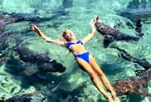 कैटरीना स्वीमिंग करते हुए करा रही थीं फोटोशूट, शार्क ने काट लिया हाथ- वीडियो देख दहल जाएगा दिल