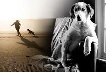 गजब: इंसान का उसके वफादार दोस्त कुत्ते से 11500 साल पुराना है रिश्ता