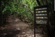 बहुत रहस्यमय है यह 'सुसाइड फॉरेस्ट', आत्महत्या के मामले में दूसरे नंबर पर है यह जंगल