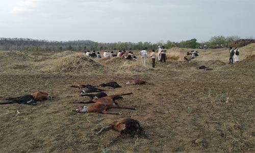 कुएं का पानी पीने से 27 बकरा व बकरियों की मौत